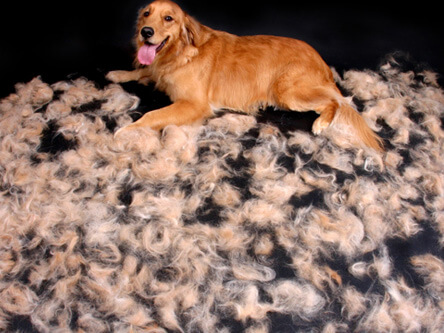 Shedding Dog Hairs